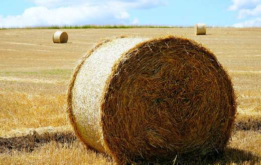Straw hay harvest agriculture field online