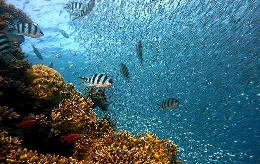 Underwater world corals fishes puzzle