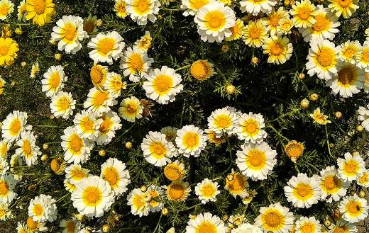 Yellow and white flowers on green grass online