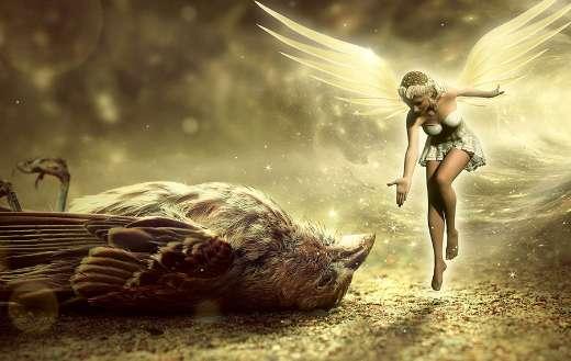 Bird death fantasy