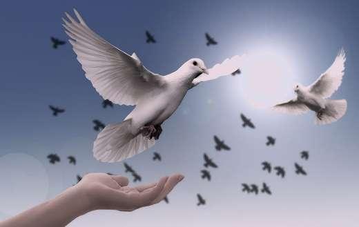 Hand trust dove