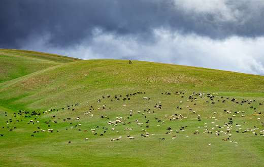 Grazing goat sheep hilly landscape online