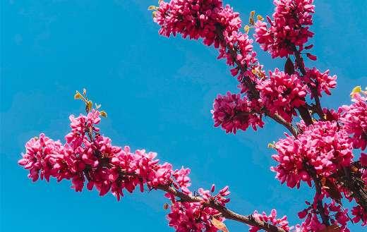 Spring flower online