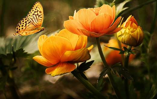 Flowers and butterfly puzzle