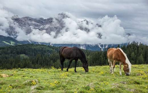 Horses mountain nature landscape