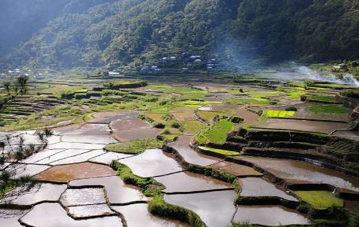 Rice field rice terraces landscape farm online