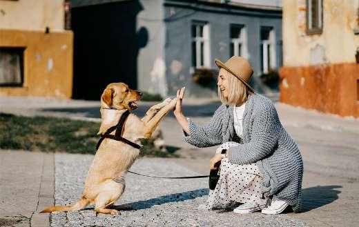 Dog woman friendship puzzle
