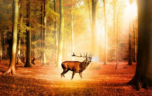 Nature forest sun deer trees puzzle