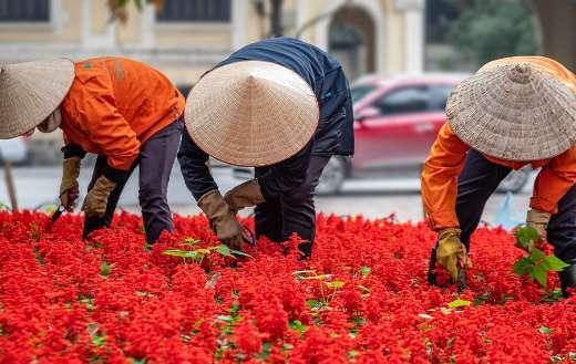 Workers people gardening Hanoi Vietnam puzzle