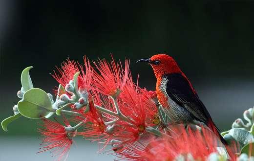 Bird flower puzzle