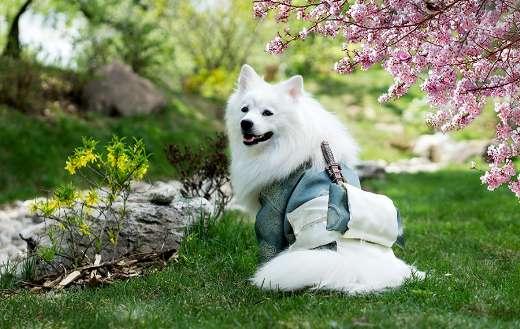 Happy white dog online