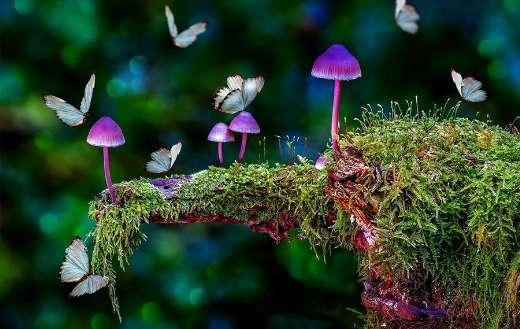 Mushrooms puzzle