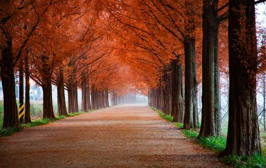 Road with red leaves trees puzzle
