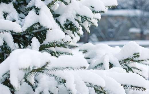 Snowflake snowdrift online