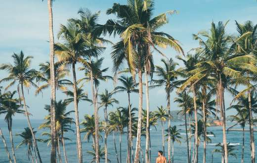 Person surrounded by coconut trees online