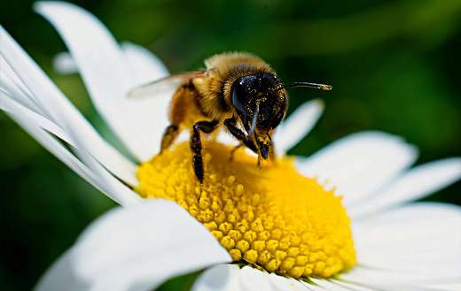 Animal insects pollination
