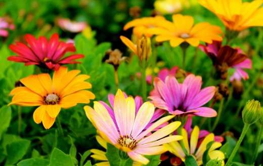 Beautiful colorful flowers online
