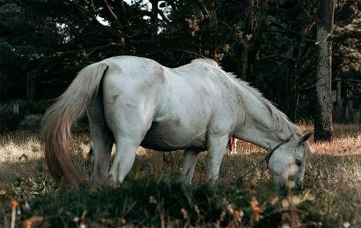 Eating white horse puzzle