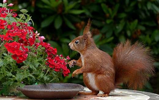 Flower animal online