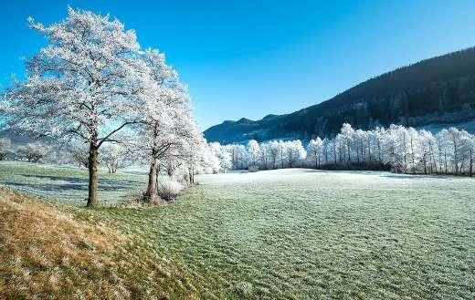 Trees winter frozen landscape puzzle