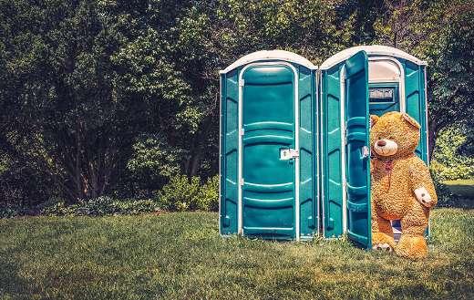 Bear using porta potty online