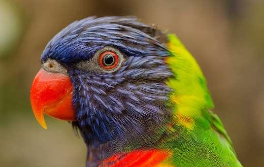 Beautiful bird colors puzzle