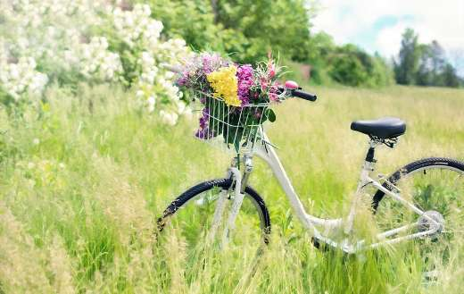 Meadow grass flowers bicycle puzzle