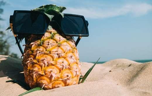 Torrid zone fruit pineapple