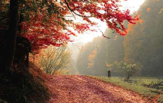 Autumn 1440p