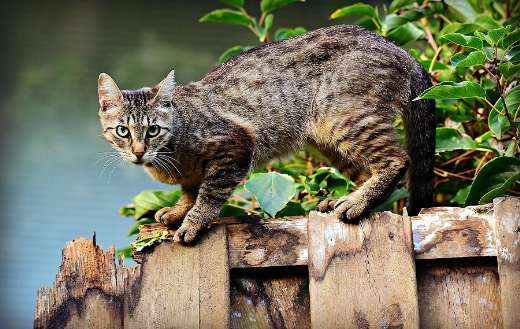 Black and brown cat online