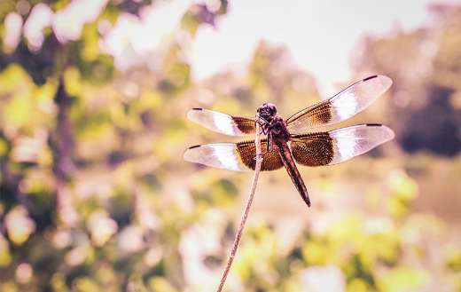 Dragonfly photo online