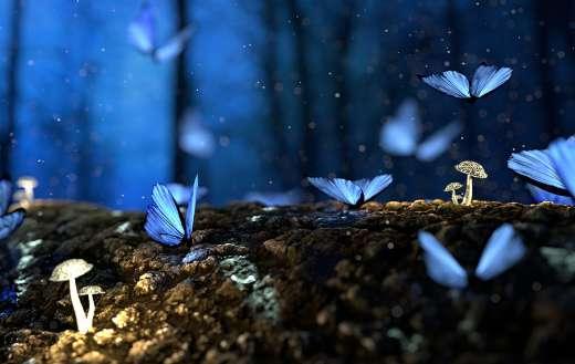 Fairies in forest online