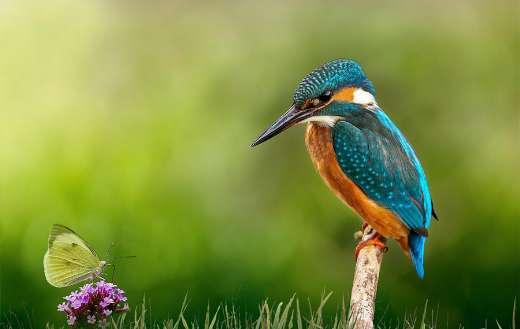 Kingfisher puzzle