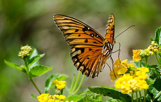 Nature flower with butterfly