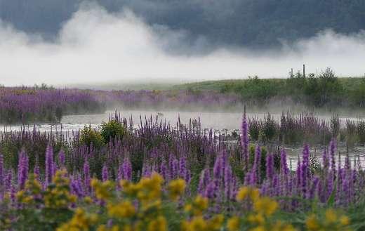 Field meadow lake plants flowers weeds