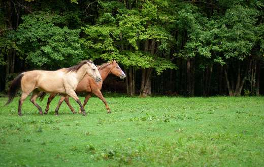 Horses in field with trees online