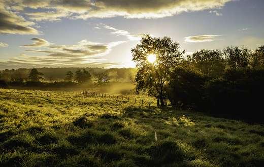 Pasture field sunset online