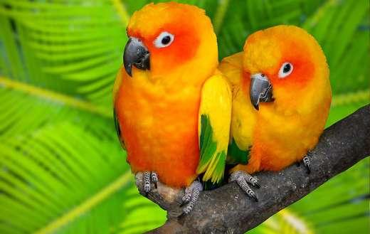 Two cute birds online