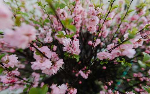Blooming tree branches on spring day
