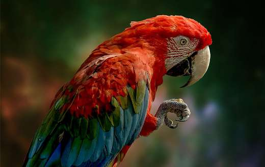 Colorful parrot bird online