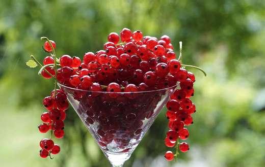 Currants beries fruits online