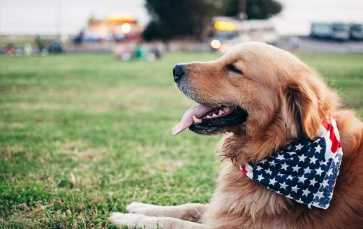 Dogs with american tie