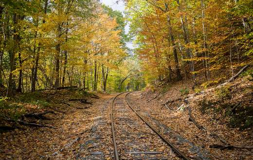 Fall leaves train tracks puzzle