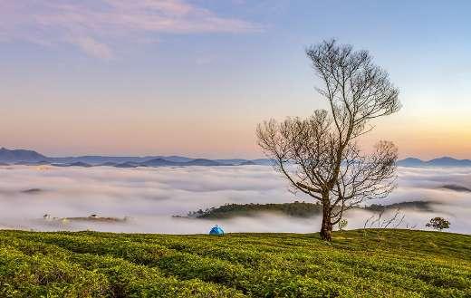 Morning fog beautiful scenery online