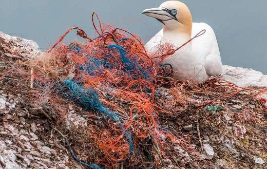 Plastic waste bird online