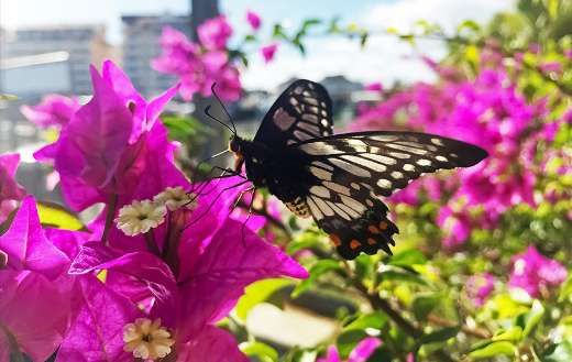Swallowtails butterfly in the flowers puzzle
