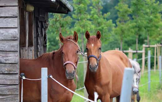 Two horses stable shelter puzzle