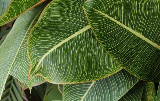 Close up photograghy of green leaves