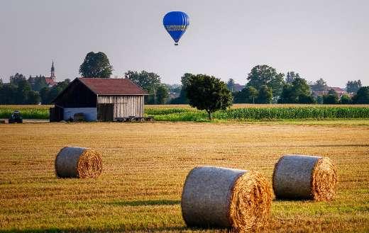 Cornfield farm online