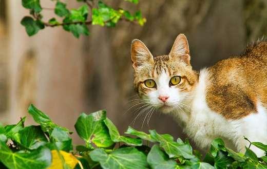 Feline fur kitty on the leaves